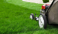 Turf Magic offers fertilization & weed control.
