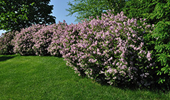 Turf Magic Offers Tree & Shrub Program